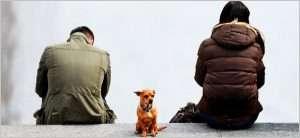 Custody-Battles-over-Family-Pets